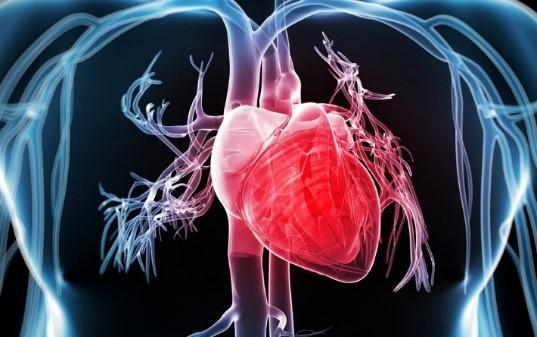 Salud integral y la conexión con la sabiduría interior a través de pulso